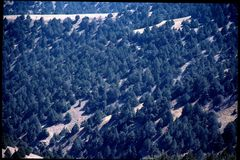 Juniper forests, Subzac pass - Afghanistan,2002 © UNEP